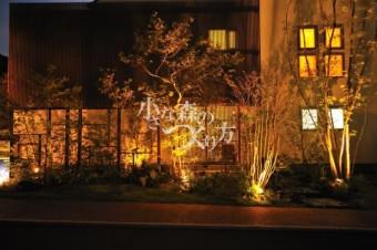 美しい樹形をライティング